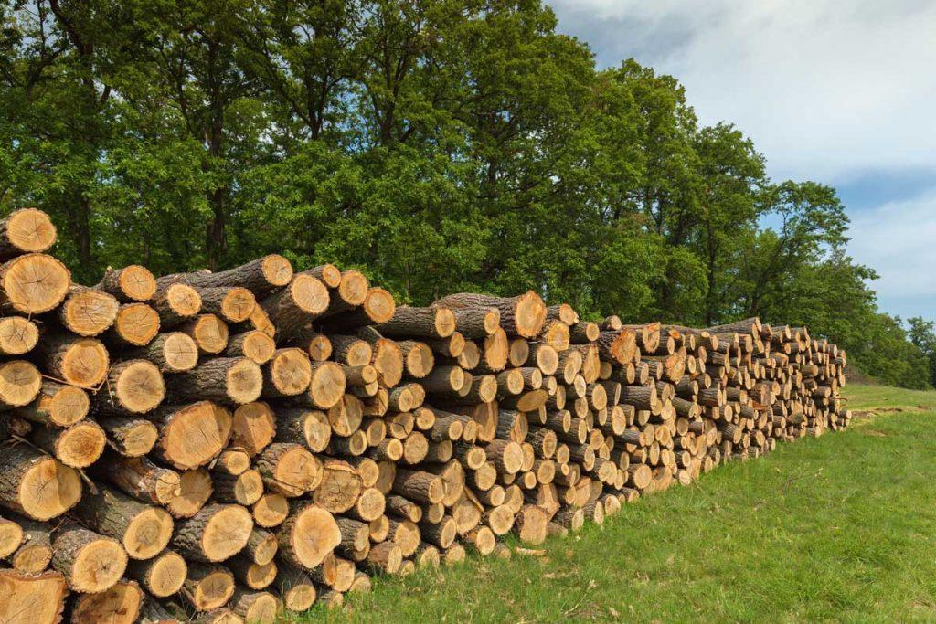 Certificación PEFC- Cadena de Custodia de productos forestales